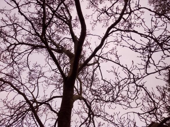 Magnolia in February