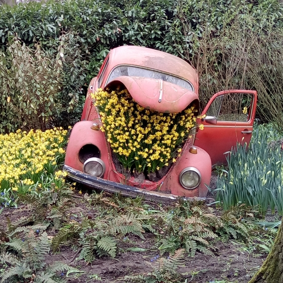 Beetle full of flowers