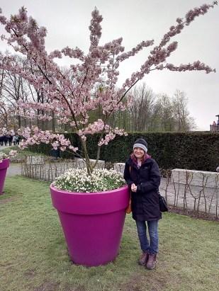 Small person under a cherry tree Keukenhof 2018