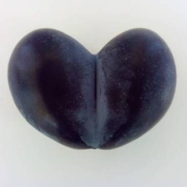 Damson Heart