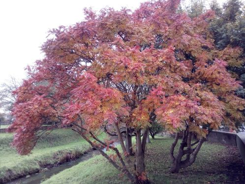 My Kind of Fireworks.  Local Tree by River Brit November 5