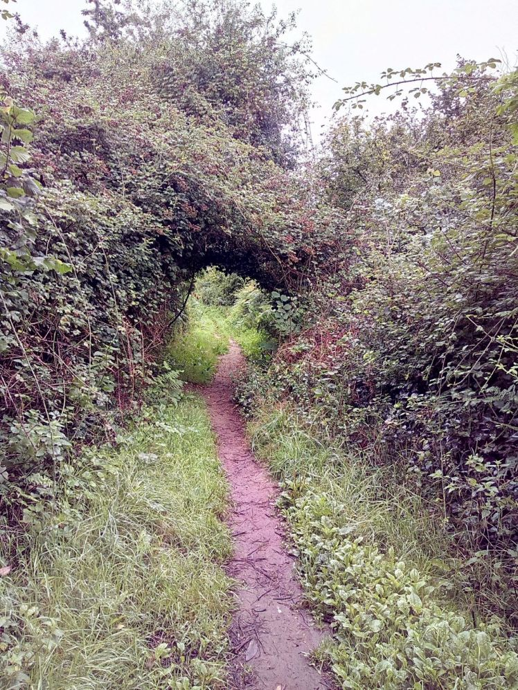 The Slightly Crooked Path to New Adventures